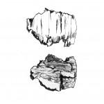 Schors (1) (droge naald ets, 12x18, 2009)