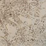 Varens (3) (linoleumsnede, afgedrukt met veengrond, 15x15 cm, 2010)