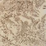Varens (6) (linoleumsnede, afgedrukt met veengrond, 15x15 cm, 2010)